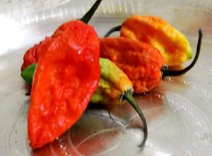 Ghost Chili (Bhoot Jolokiya)