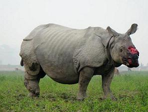 assam rhinoceros protection act